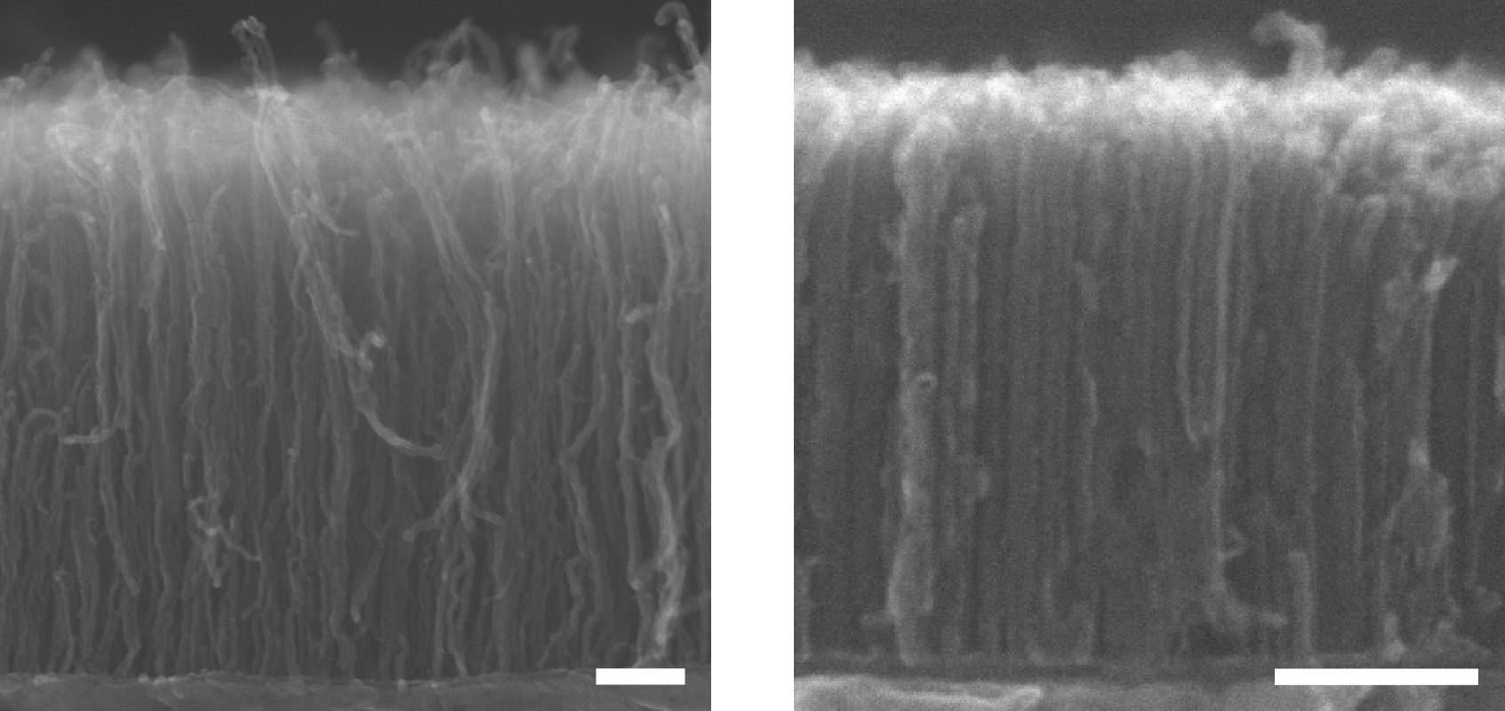 how to grow carbon nanotubes
