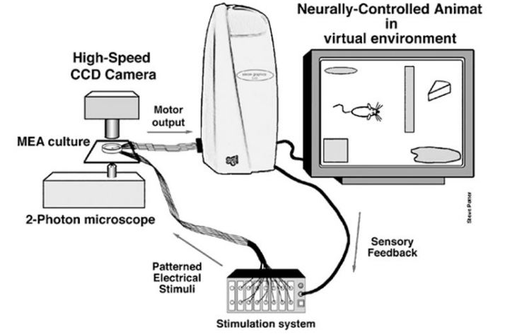 neurally_controlled_animat