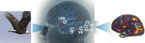 neural encoding and decoding ft