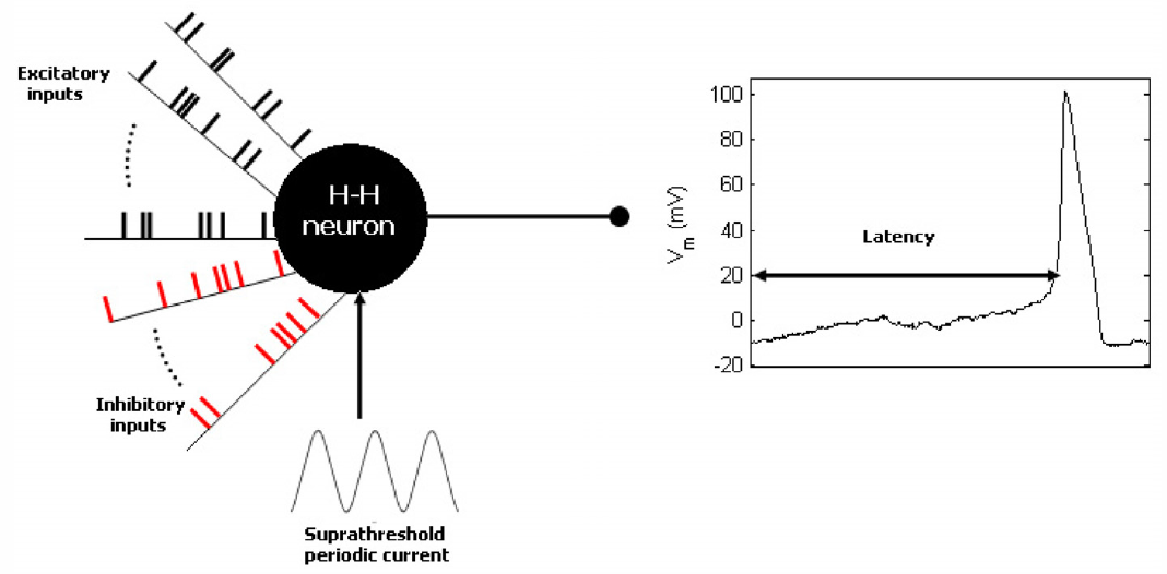 How noise in brain cell signals affects neuron response time and neural ccuart Choice Image