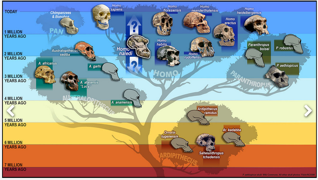 """the human family tree essay Write a summary of """"family tree"""" in about 150 words write a short analytical essay (at least 300 words) about """"family tree"""" you must focus on the relationships between the characters."""