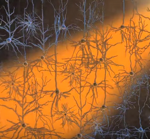 Optogenetic inhibition of neurons (credit: McGovern Institute for Brain Research/MIT)