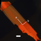 A single crystal of the new organic semiconductor material shown in polarized light. It is approximately twice as fast as the parent organic material from which it was derived. The white scale bar at the bottom center of the photo represents 10 microns (10 millionths of a meter). (Credit: Stanford University)