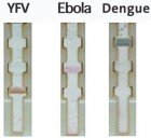A paper-based diagnostic test distinguishes between yellow fever virus, Ebola and dengue using different colored nanoparticles tagged with antibodies that target specific virii (credit: Chunwan Yen)