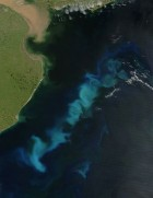 Phytoplankton bloom as a form of geoengineering (credit: Wikimedia Media)