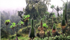 Is life based on software and information? (Plants in the Rwenzori Mountains, Uganda; credit: Wikimedia Commons)