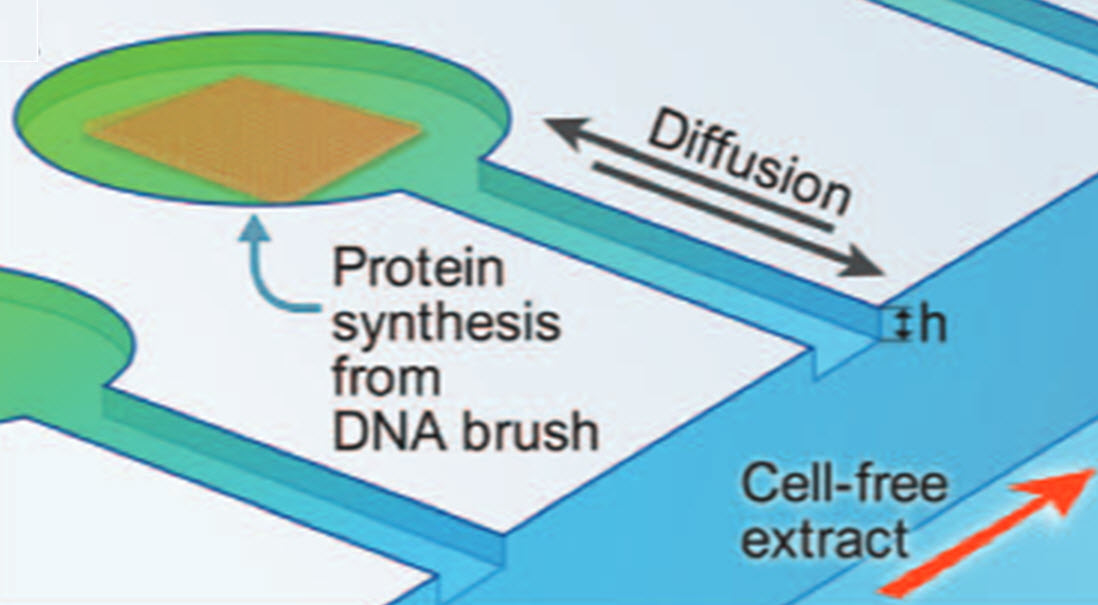 Artificial cells mimic natural protein synthesis | Kurzweil
