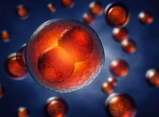 red cell dividing in biological setting