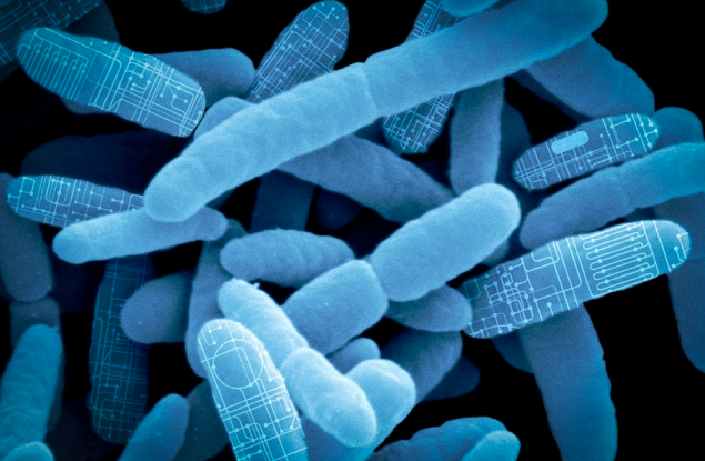 """MIT spinout Synlogic is re-programming bacteria found in the gut as """"living therapeutics"""" to treat major diseases and rare genetic disorders (credit: Synlogic)"""