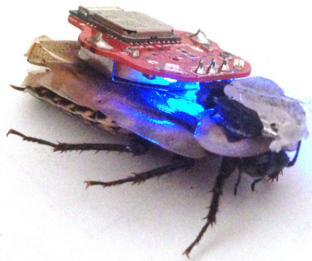 The RoboRoach: control a living insect from your smartphone | Kurzweil