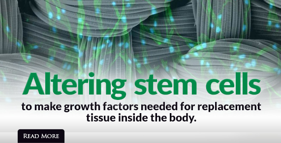 Altering stem cells to make growth factors needed for replacement tissue inside the body.