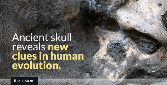 Ancient Skull Reveals New Clues in Human Evolution.