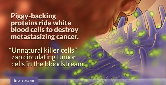 Piggy-backing proteins ride white blood cells to destroy metastasizing cancer.