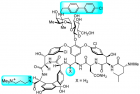 Modified vancomycin antibiotic (credit: Akinori Okano et al./PNAS)